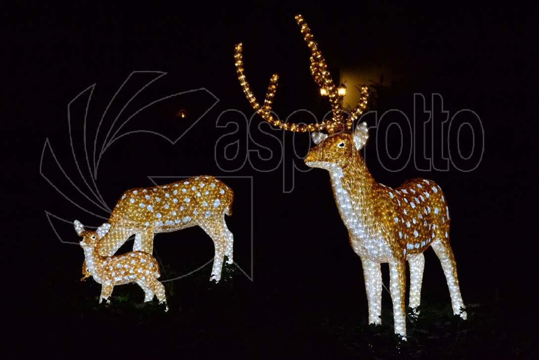 Cervo luminoso colorato